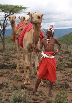 camel_bushwise_240