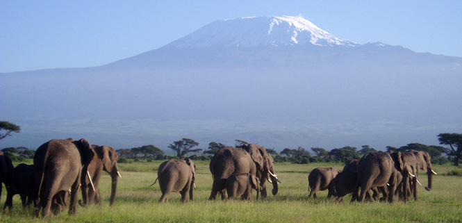 elephants_mount